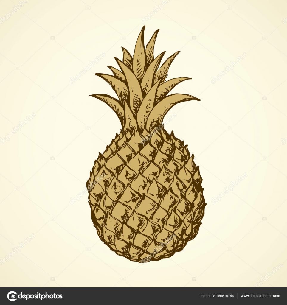 Ananas Rysunek ananas. wektor rysunek — grafika wektorowa © marinka #166615744