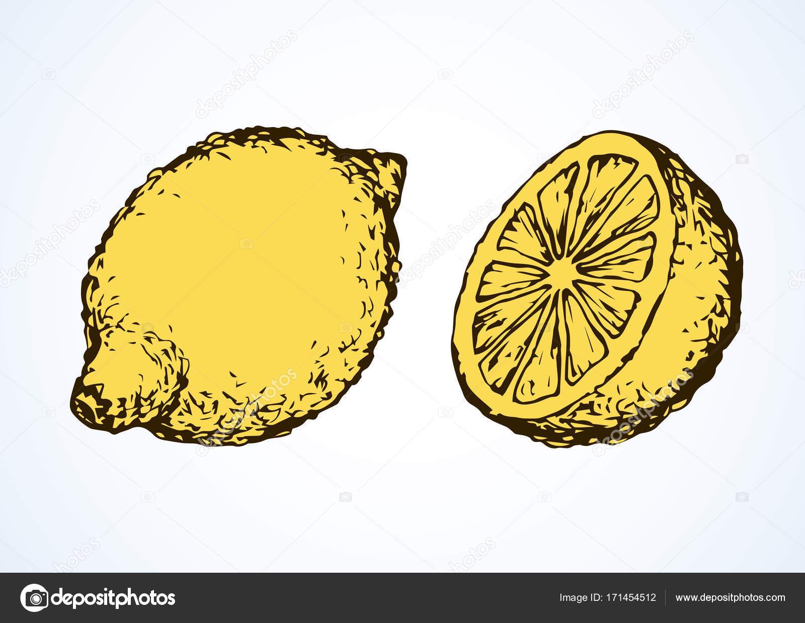 Limoni Disegno: Stock Vector © Marinka #171454512