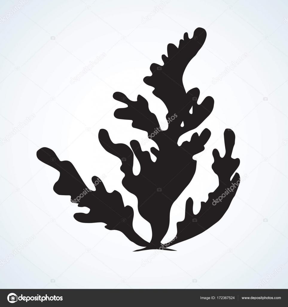 Alghe Disegno Vettoriale Vettoriali Stock Marinka 172367524