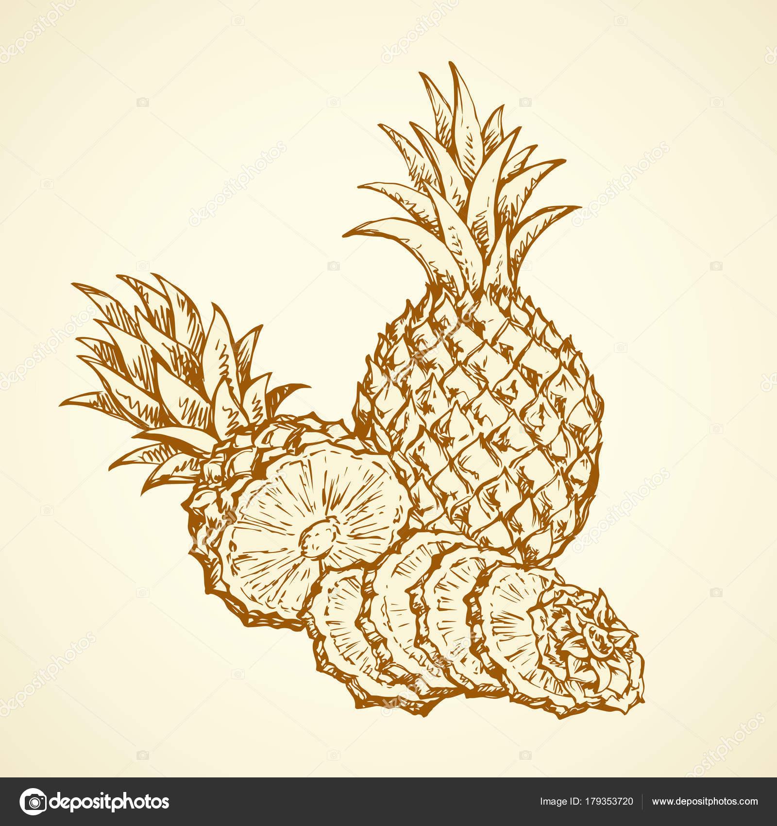 Ananas Rysunek ananas. wektor rysunek — grafika wektorowa © marinka #179353720