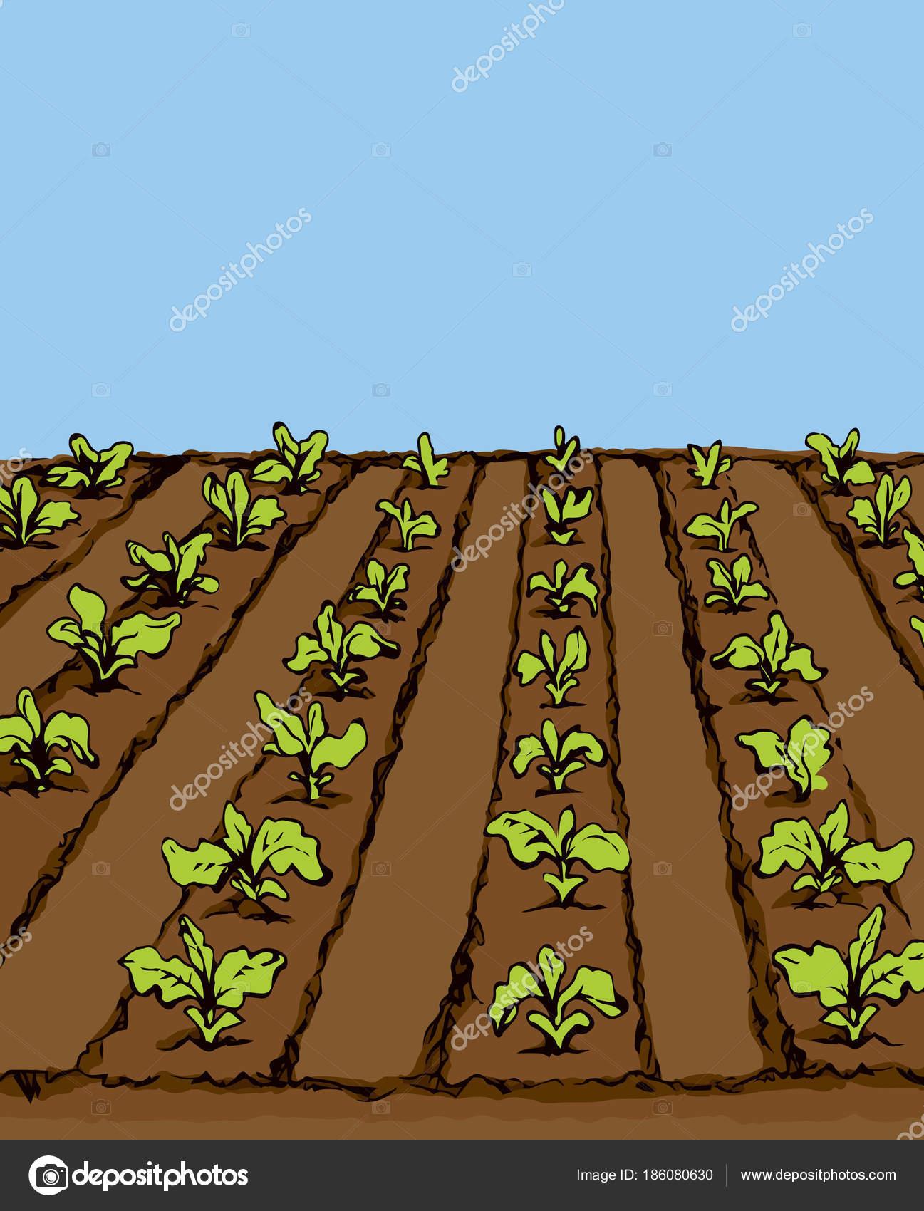 Garden beds. Vector drawing — Stock Vector © Marinka #186080630