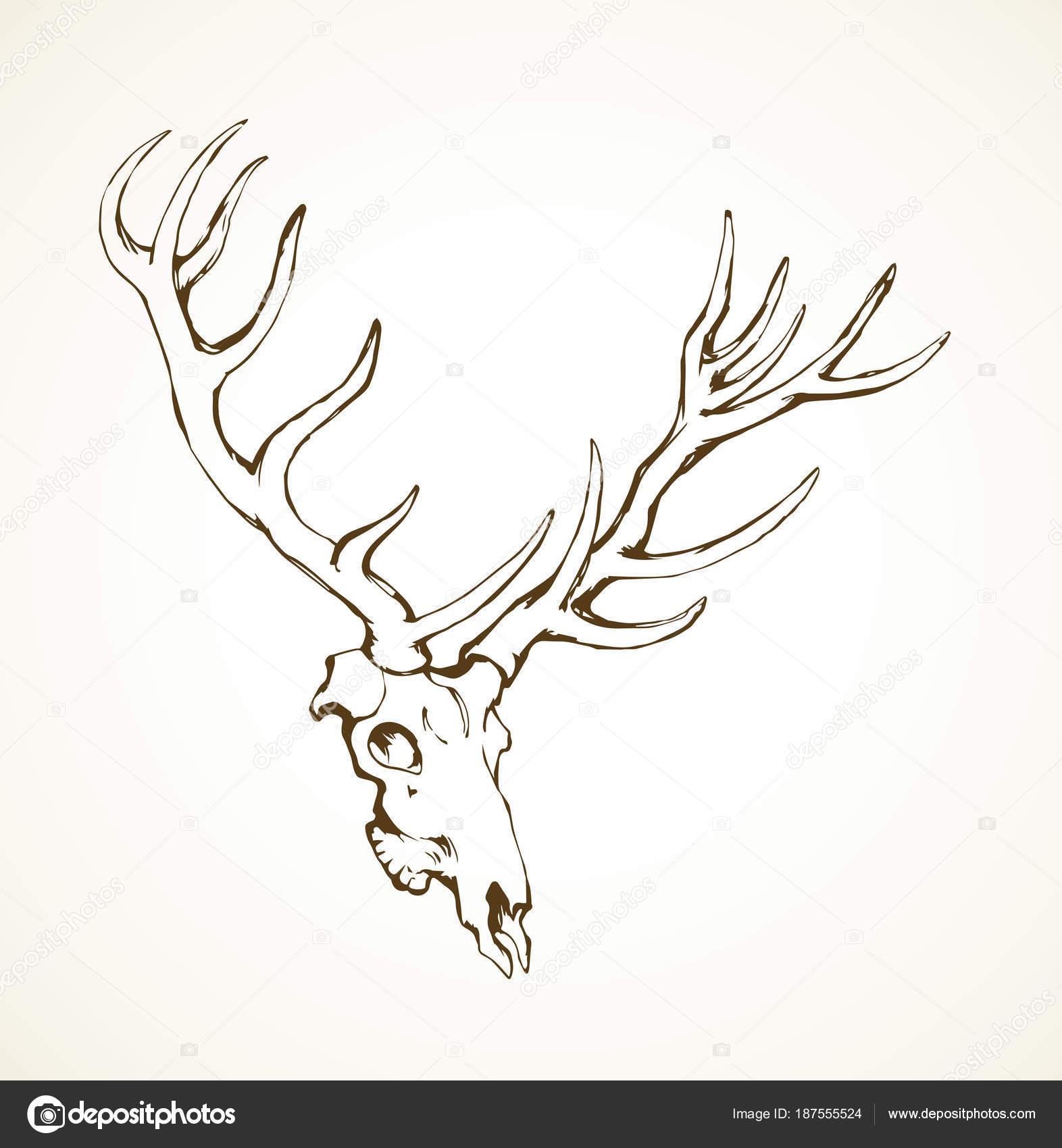 Cráneo de ciervo. Dibujo vectorial — Archivo Imágenes Vectoriales ...