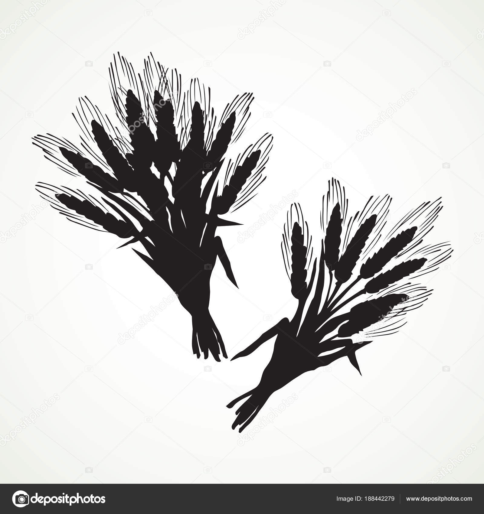 Seven Spikelets Of Wheat Vector Drawing Stock Vector Marinka