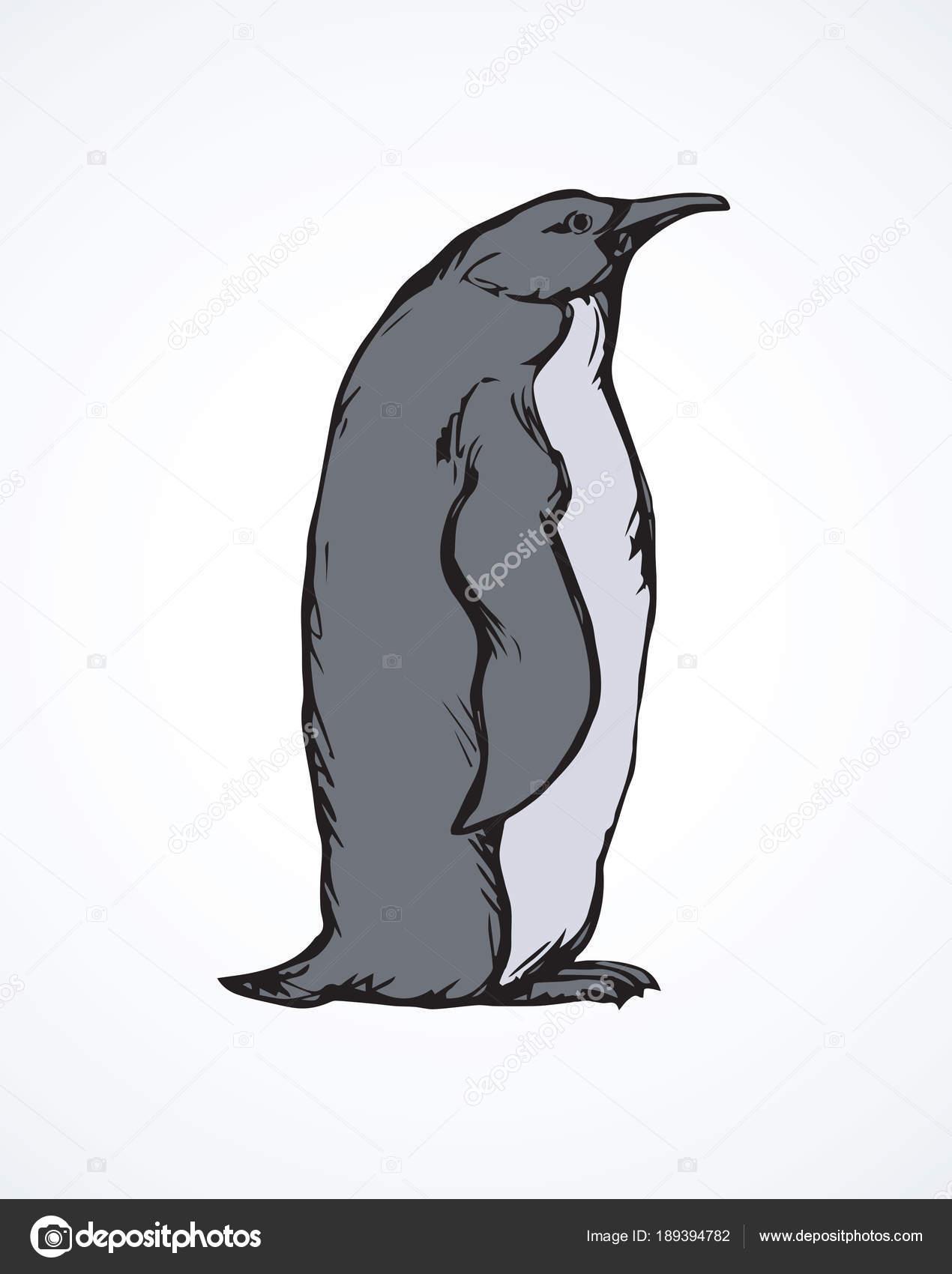 Pingüino. Dibujo vectorial — Archivo Imágenes Vectoriales © Marinka ...