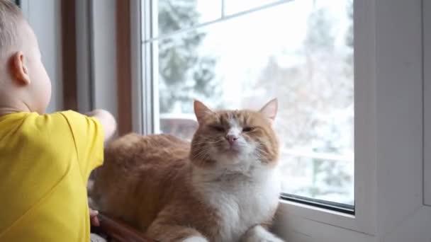Malý batole si pohladí červenou zázvorovou kočku. Domácí zvířata a děti si hrají doma. Útulná scéna, hygge, životní styl.