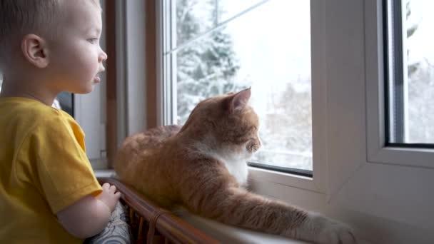 Kind und Haustier zu Hause. Rote Ingwer-Tabby-Katze und kleiner Kleinkind-Junge schauen aus dem Fenster und beobachten fallenden Schnee. Tier- und Kinderfreundschaft. Gemütliche Szene, Lifestyle.