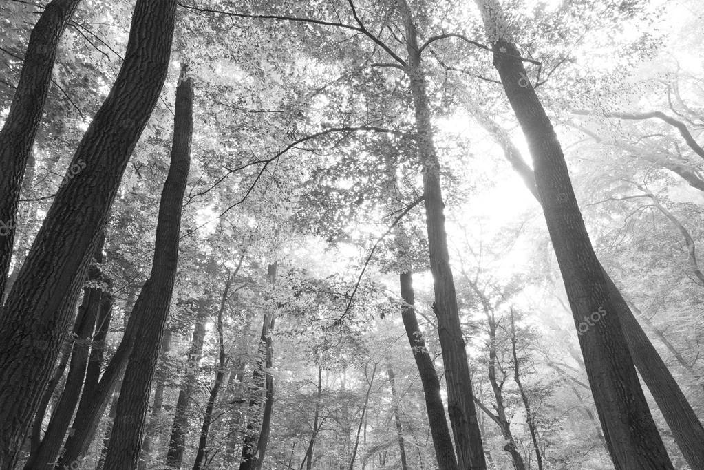 Black and white forest landscape