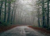 Fotografie Opuštěné silnici lesem