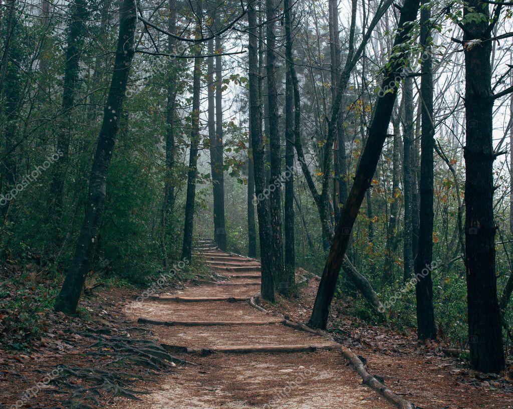 Autumn dark forest path