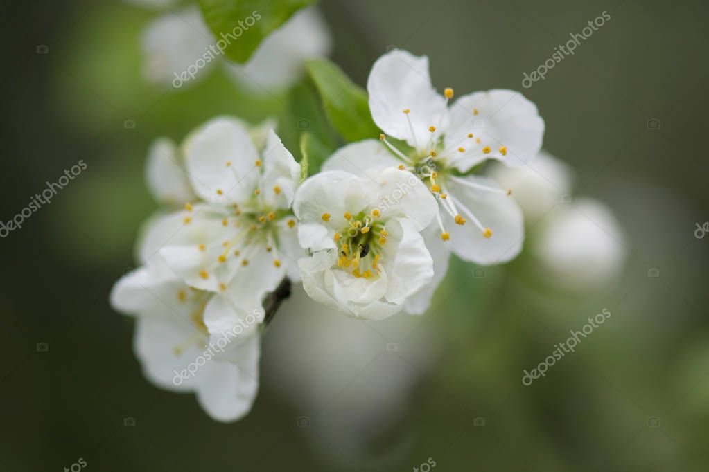 Spring flower, close up flora image