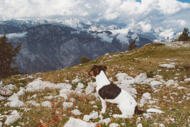 Cute dog watching landscape