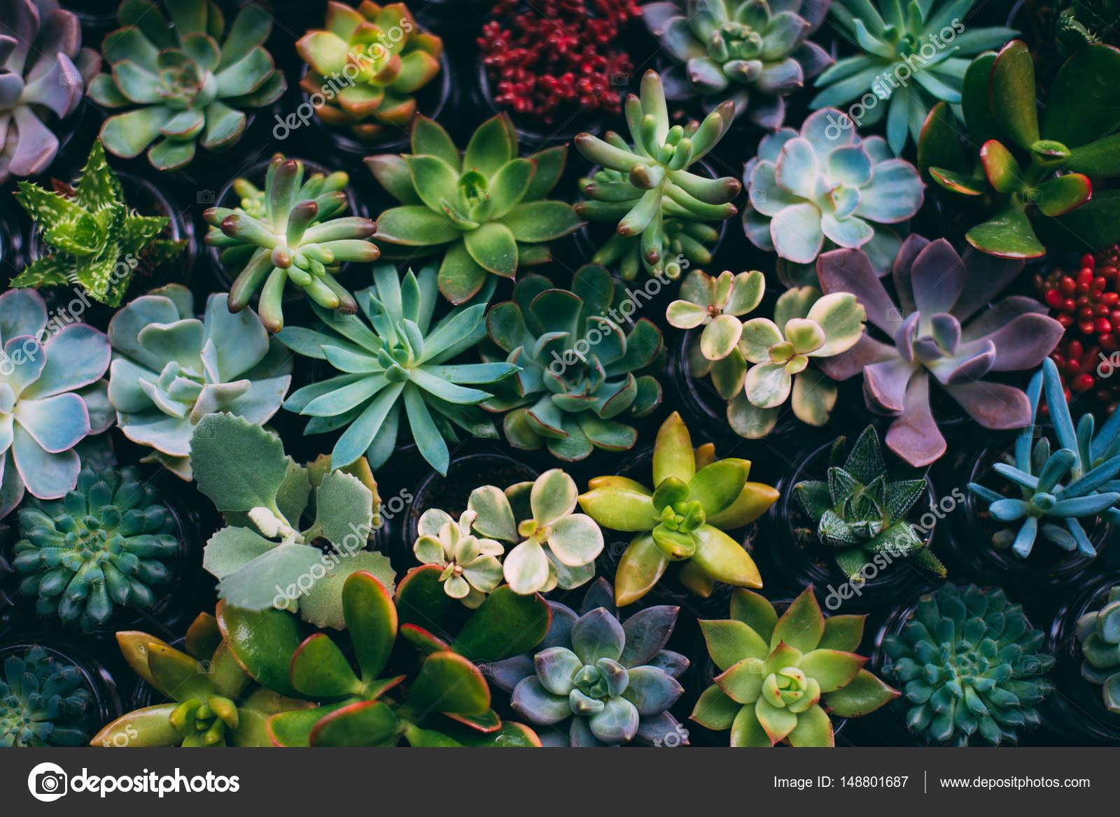 Flores Del Jardin Primer Plano De Flores De Jardin Pequeno Fotos