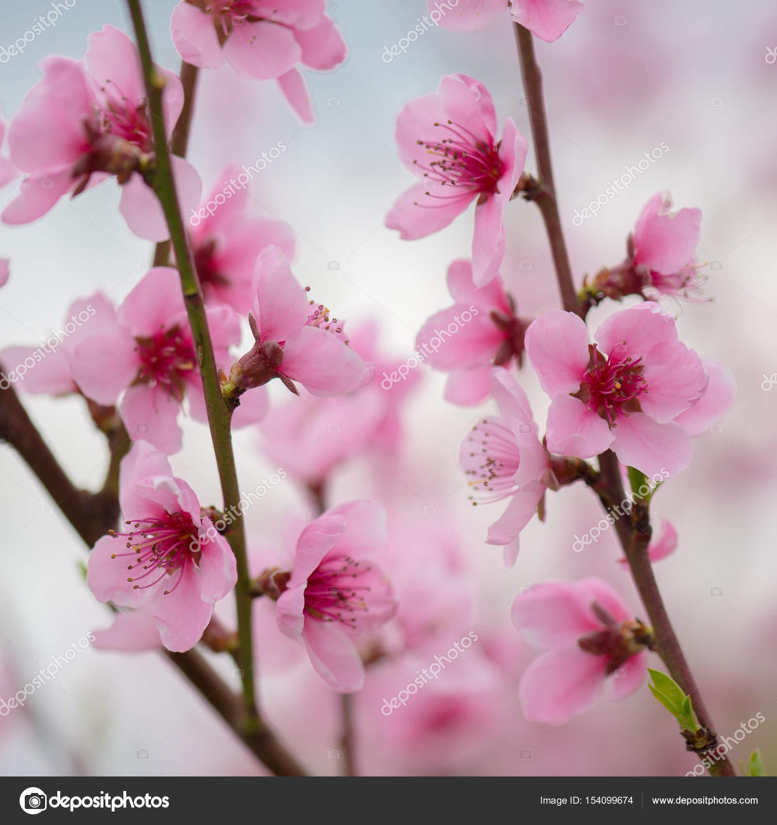 Flores Como Fondo De Pantalla