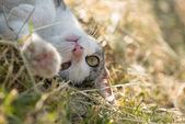 Aranyos vicces macska szabadtéri játék. Játékos macska.