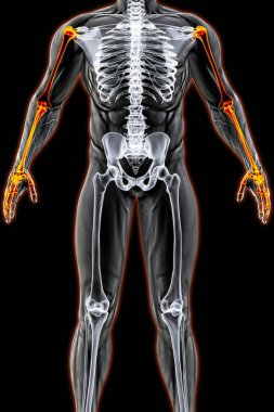 male body under the X-rays