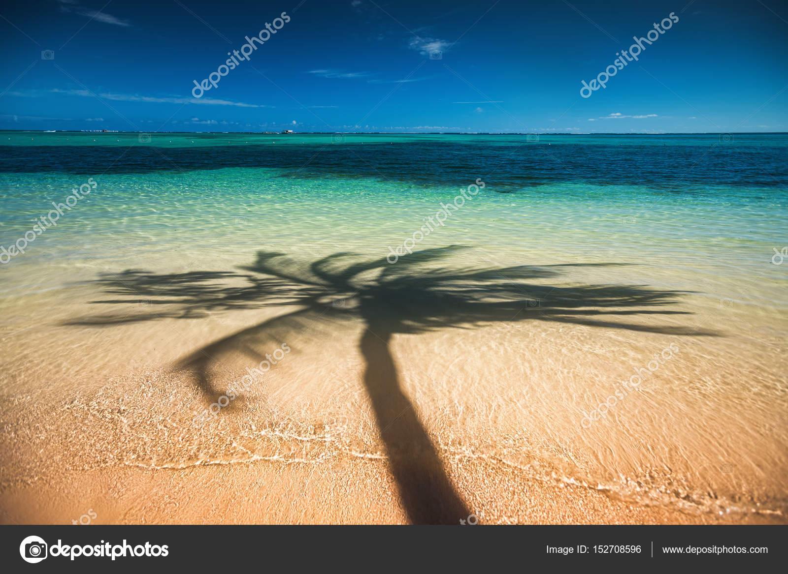 Ombra di alberi di palma sulla spiaggia tropicale punta for Disegni di casa sulla spiaggia tropicale
