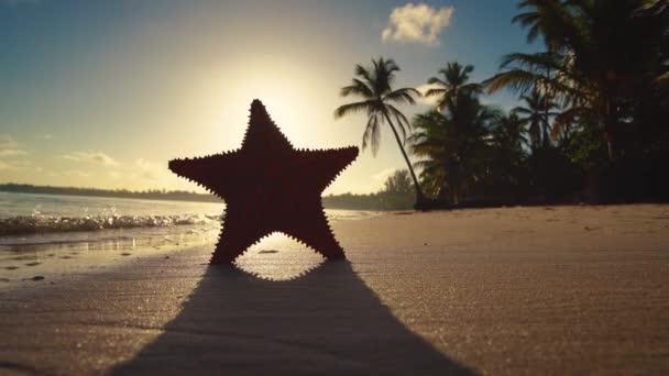 Alba tropicale dellisola. Spiaggia di sabbia, palme e stelle marine, video