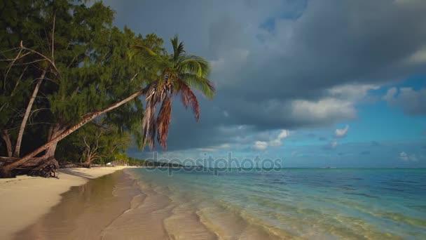 Palm trees and tropical island beach. Punta Cana video.