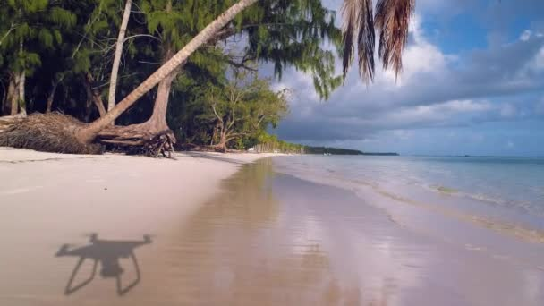 Tropical lagoon, sandy island beach, palm tree and flying drone. Punta Cana.