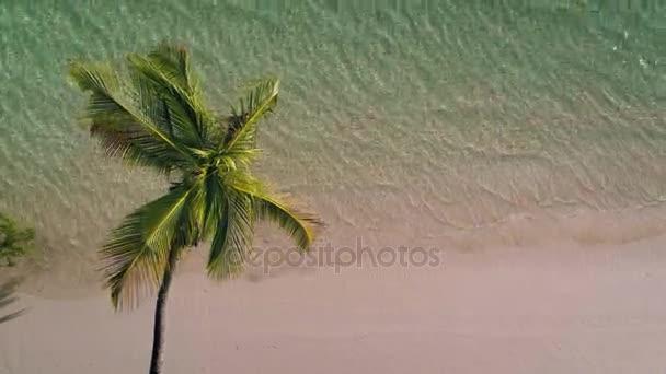 Vista aerea della spiaggia di Palm tree e sandy island