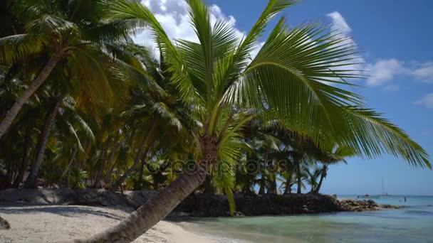 Táj és a trópusi szigeten strand, és a gyönyörű zöld pálmafák. Saona sziget és a Karib-tenger.
