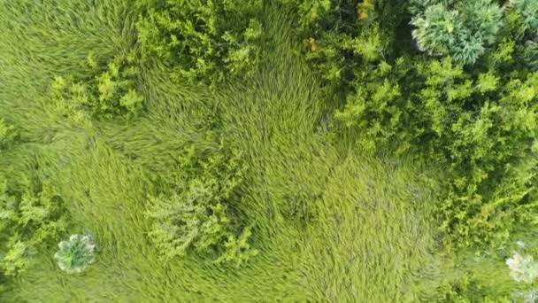 Letecký pohled na tropického deštného pralesa v Punta Cana, Dominikánská republika