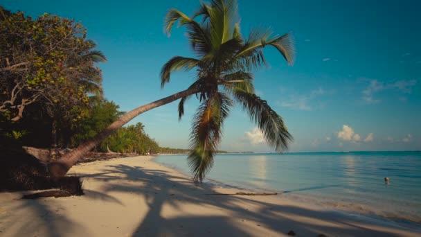 Palma verde sulla spiaggia di Isola di sabbia bianca. Punta Cana, Repubblica Dominicana
