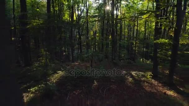 Letecké video z podzimu lesních stromů v hoře. Přírodní zelené dřevo slunečního záření pozadí