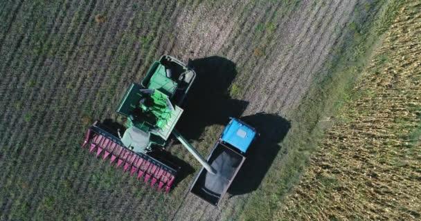 Letecká dron pohled farmář řízení zemědělské zkombinovat a náklaďák plný obilí. Zemědělství slunečnicové pole.