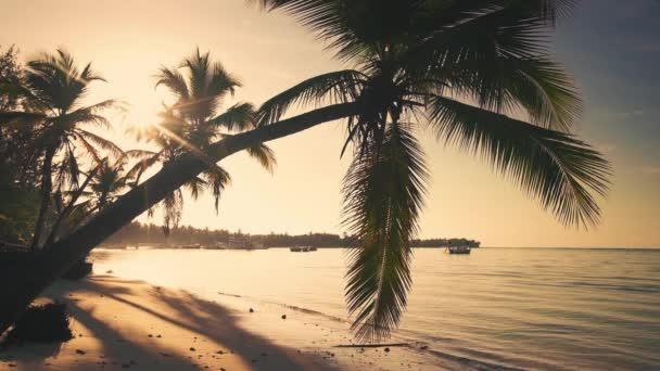 Pálmafa és trópusi sziget strand, napkelte lövés Punta Cana, Dominikai Köztársaság