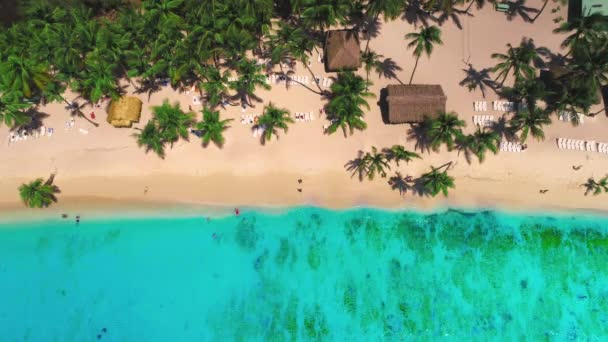 Aerial view over tropical palm trees beach and Caribbean sea, Saona Island