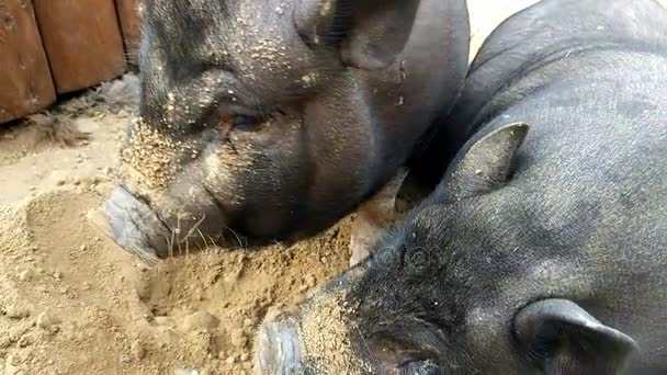 Gute schwarze Schweine Reife Klempner Pornos