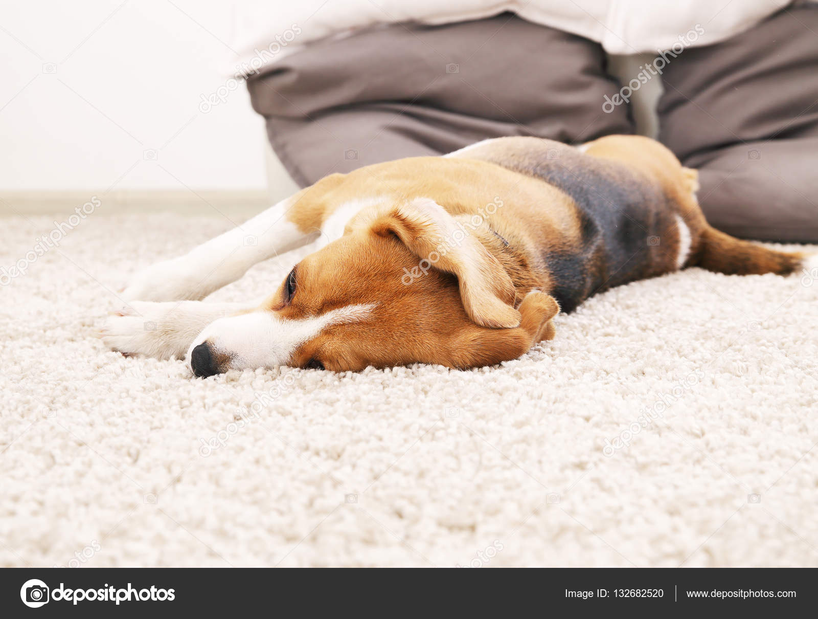 Tappeto Morbido Per Cani : Bugia di cane sul tappeto morbido relax casalingo per beagle