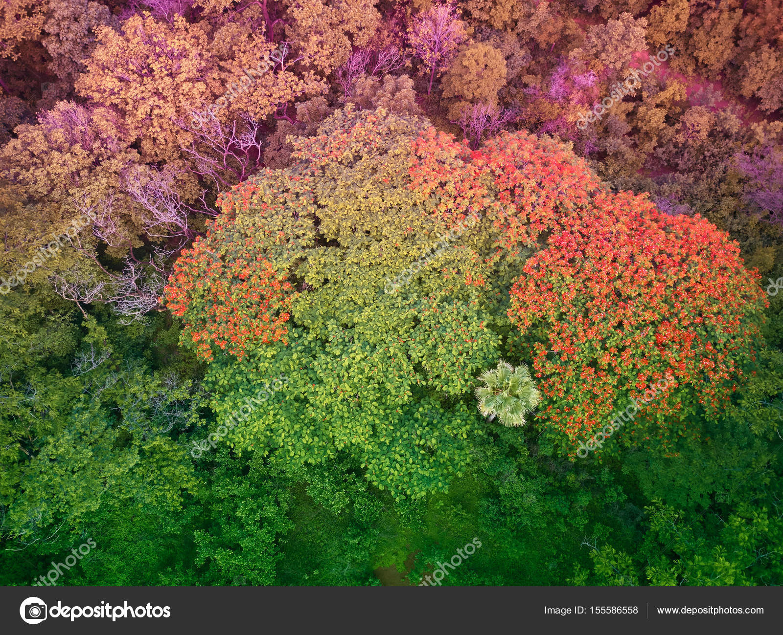Colorful trees in Central America — Stock Photo © dimarik #155586558