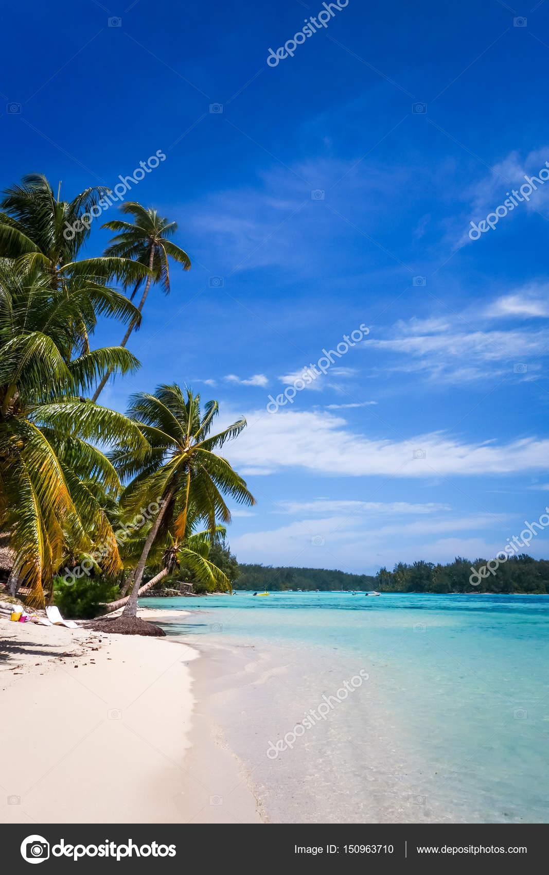 Paradise Tropical Beach And Lagoon In Moorea Island Stock