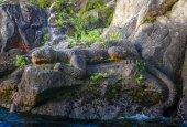 Maori rock carvings, lucertola, Lago Taupo, Nuova Zelanda