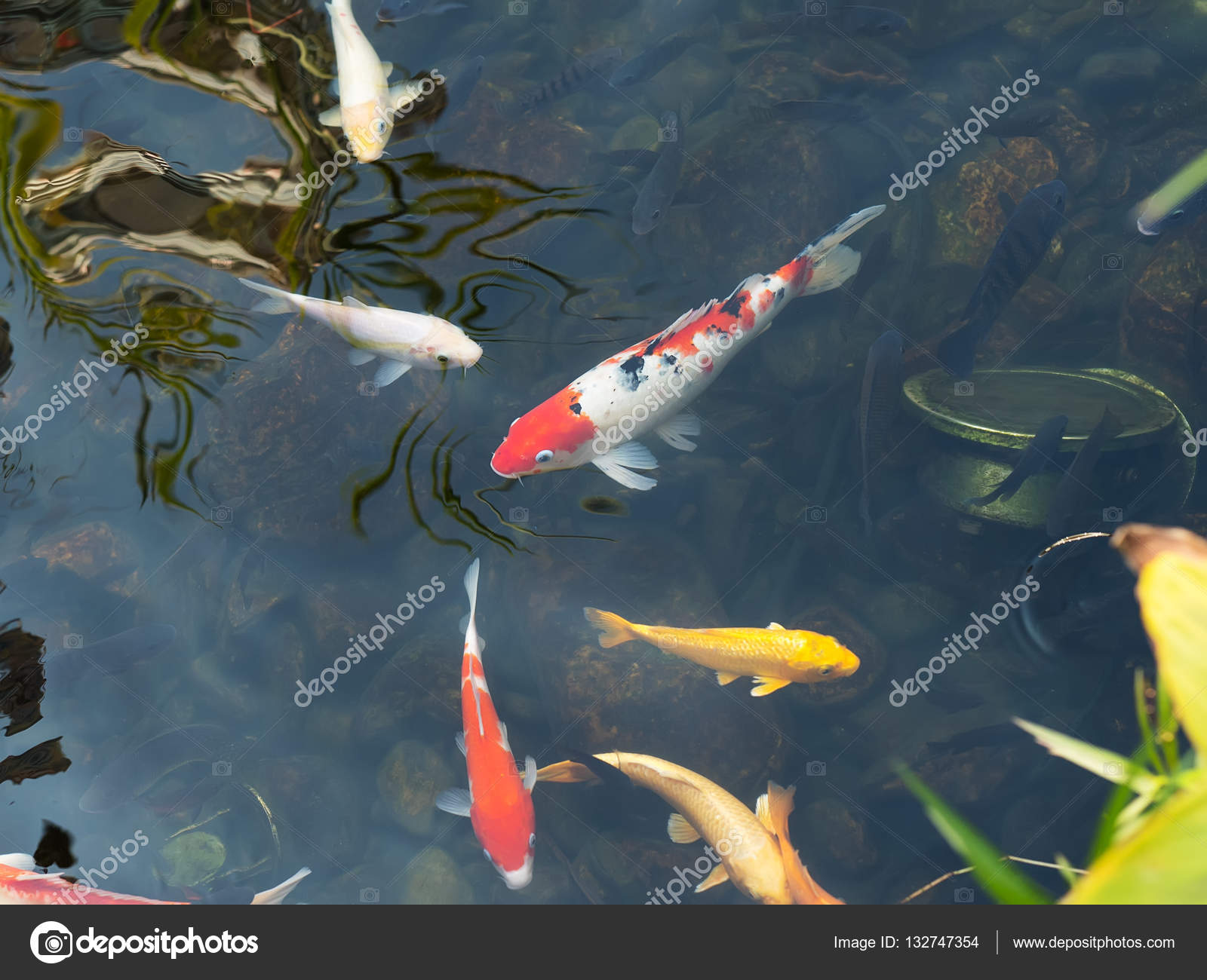 Vissen In Vijver : Koi vissen in de vijver u stockfoto firefox