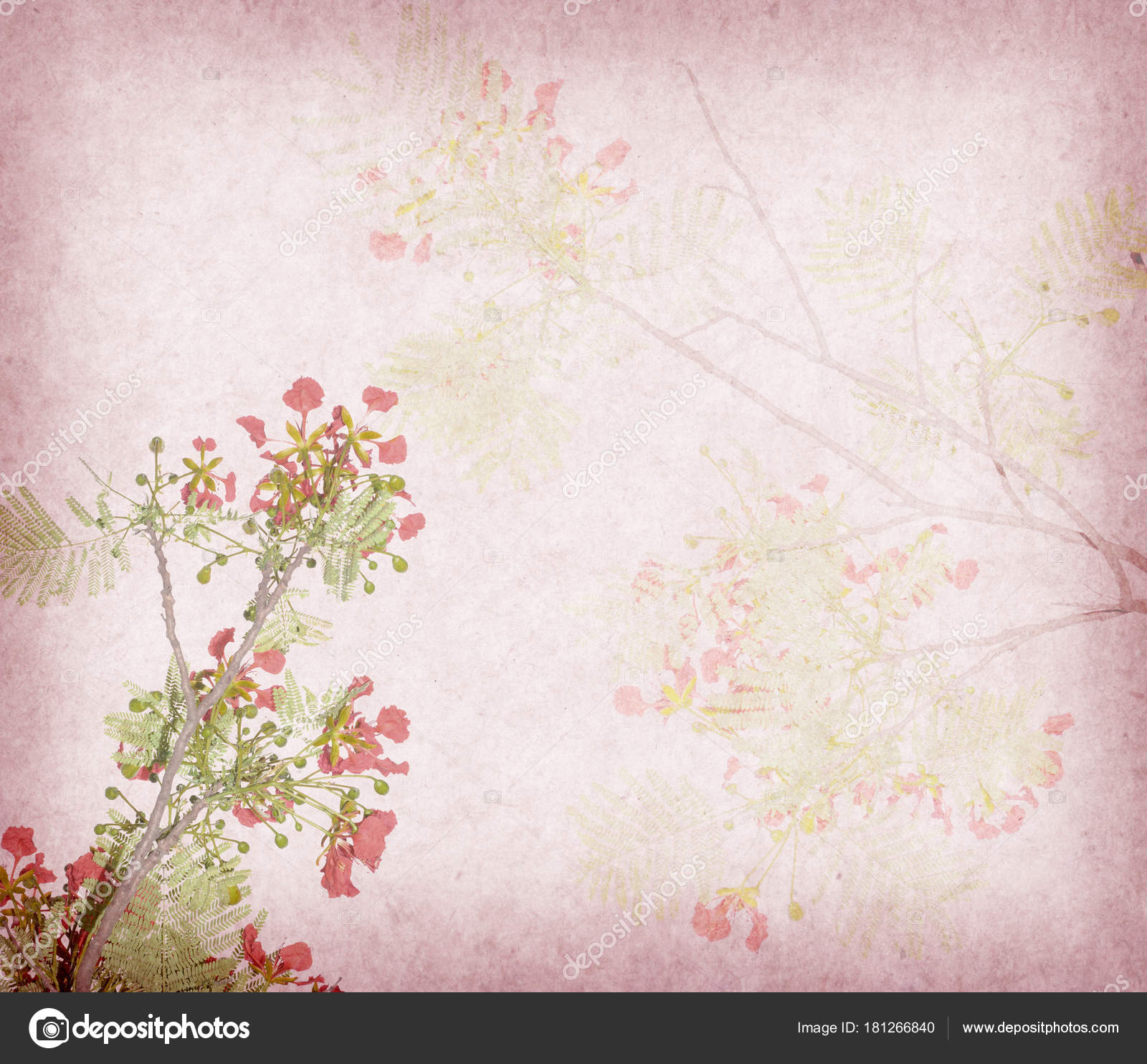 Peacock Flowers Tree Old Antique Vintage Paper Background Stock
