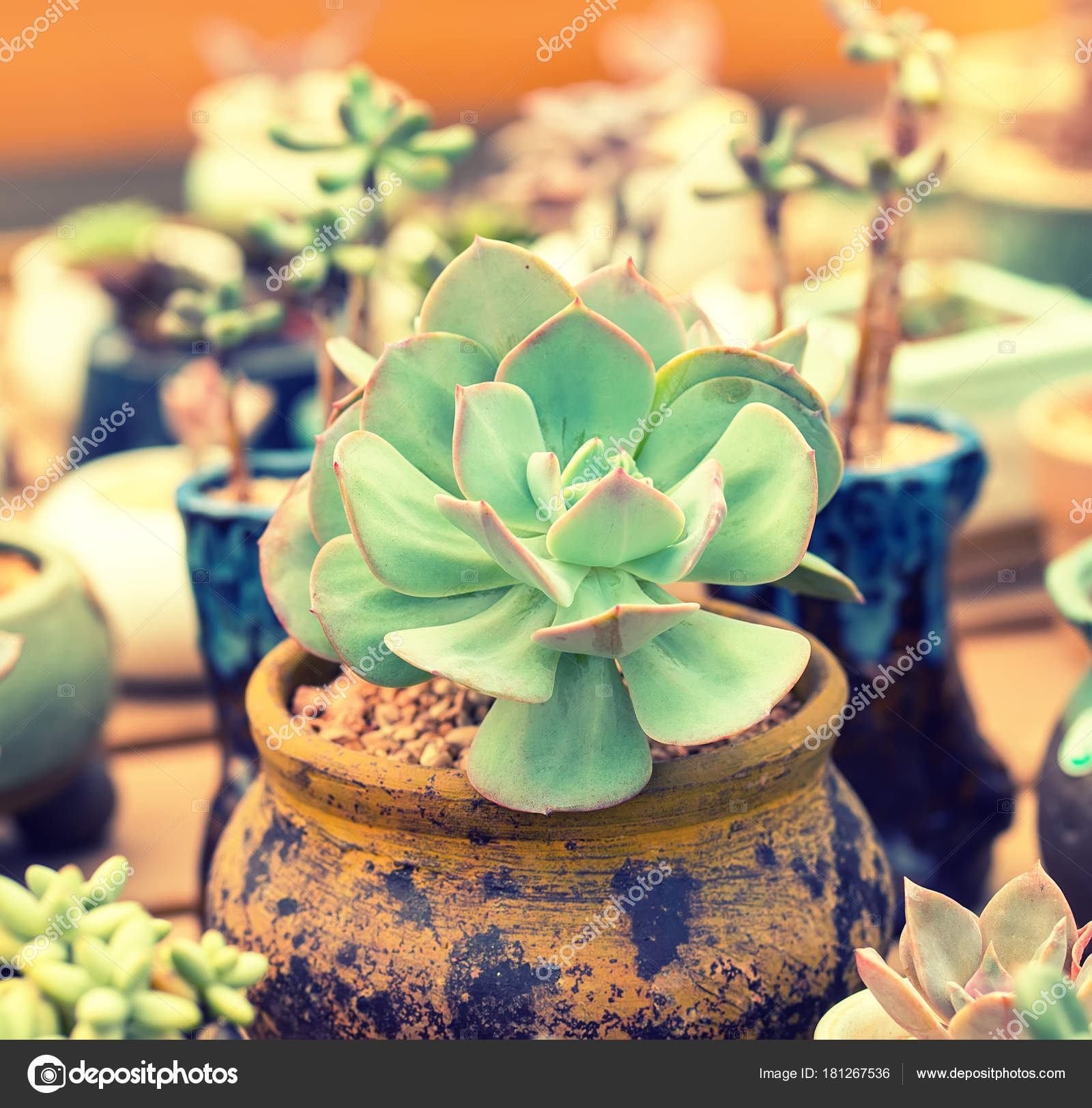 Plantes Succulentes Miniatures Jardin Photographie Firefox