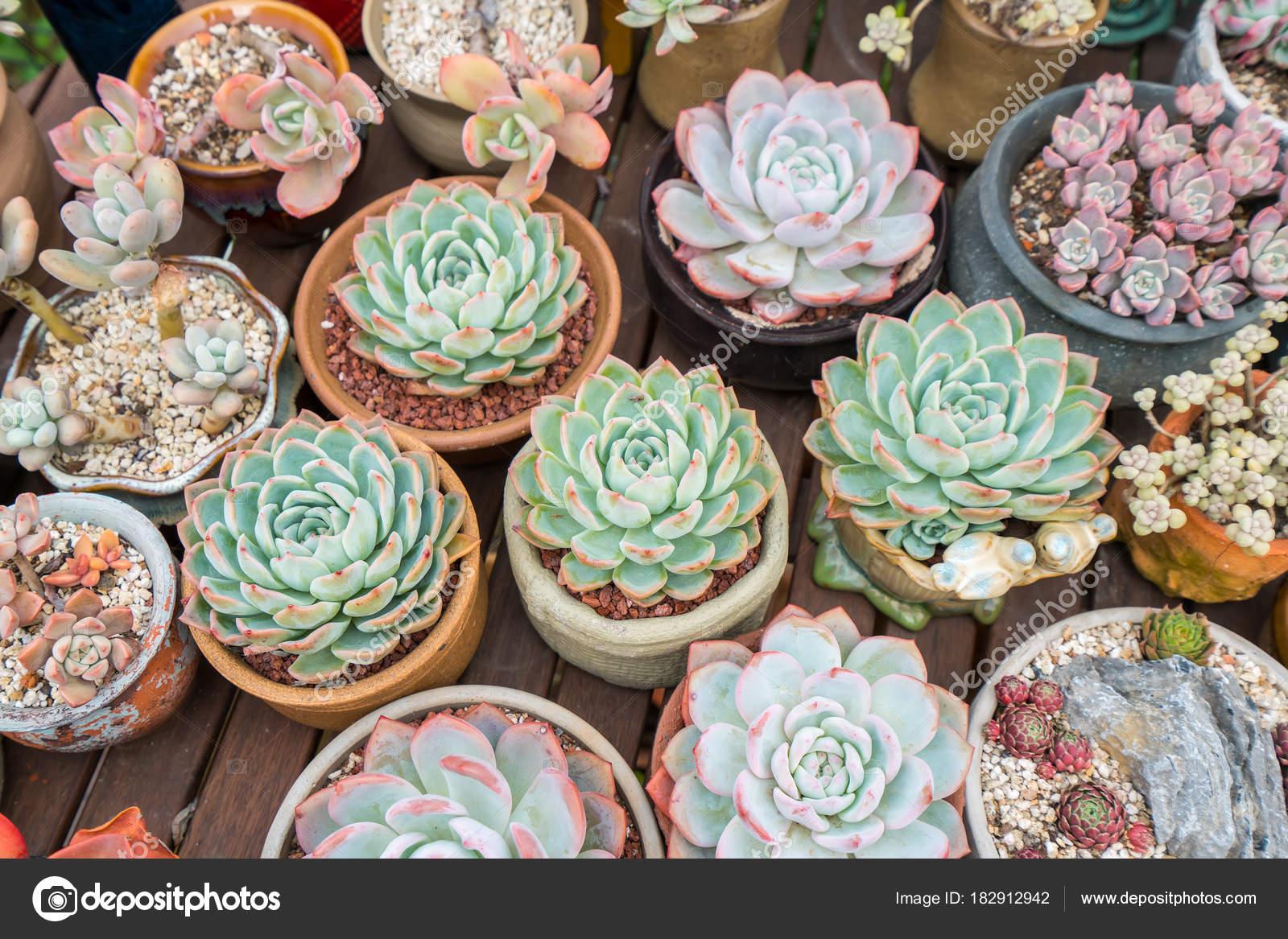 Plantes Succulentes Miniatures Au Jardin Photographie Firefox
