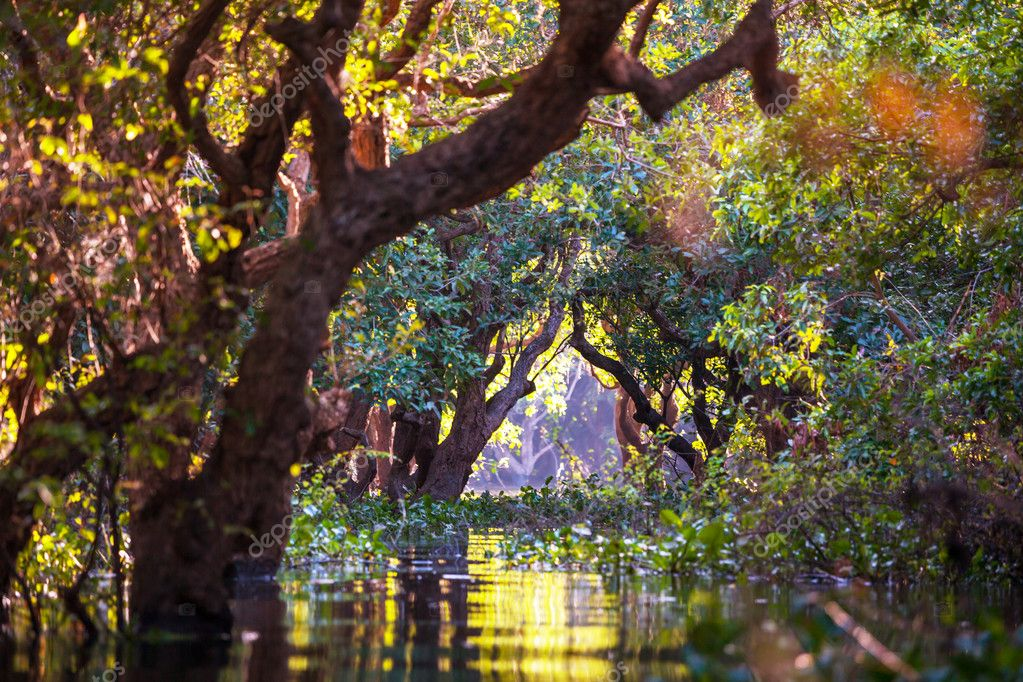 Trees in mangrove rain forest