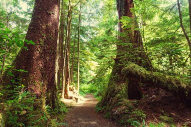 Rain forest in Vancouver island