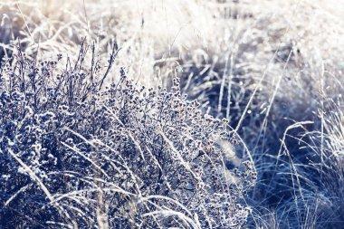 Close-up shot of the frozen grass