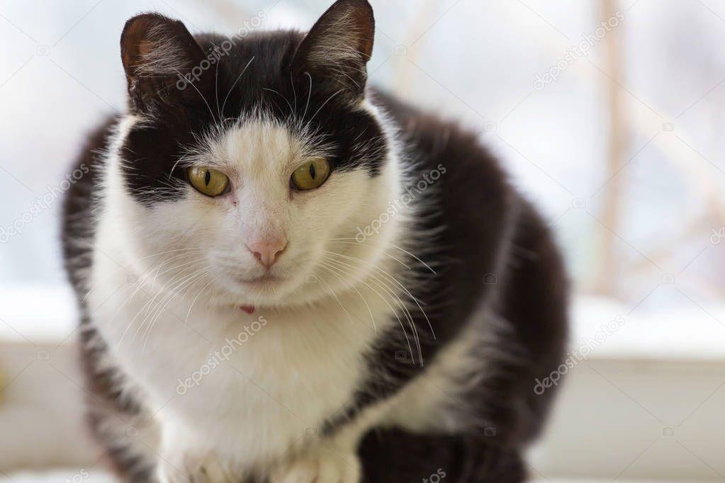Close-up shot of Cat