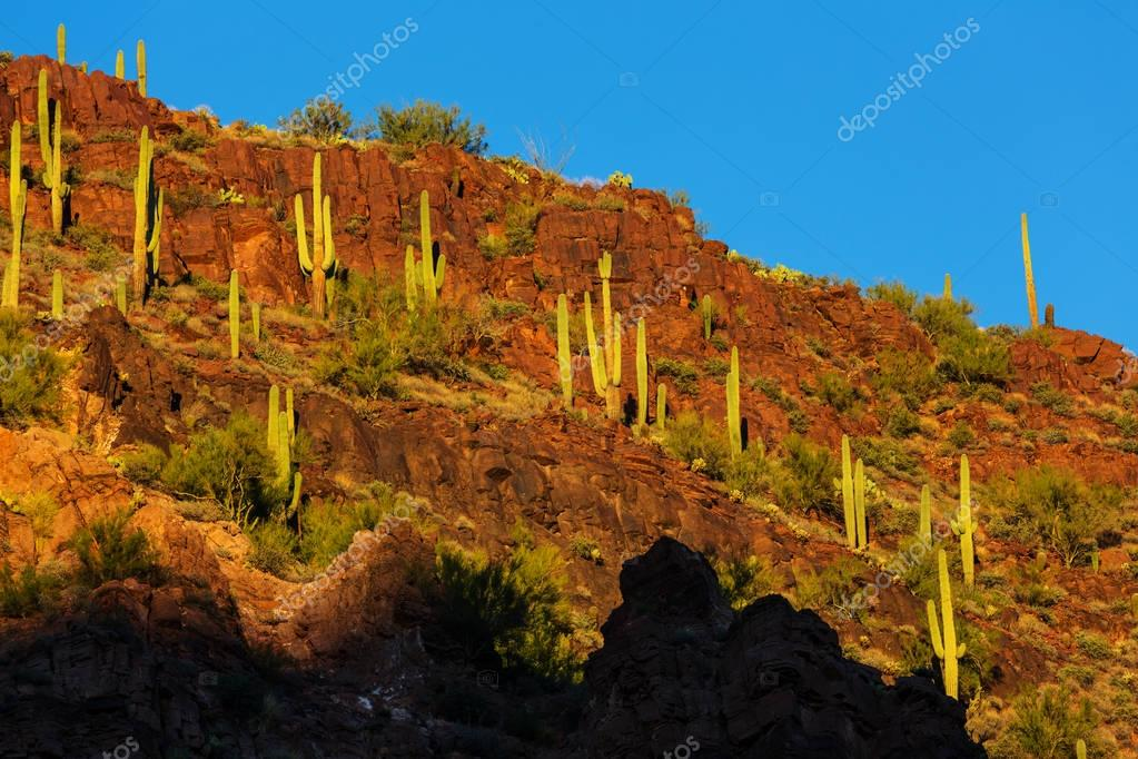 Beautiful Arizona landscapes