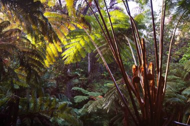 deep Jungle in Hawaii