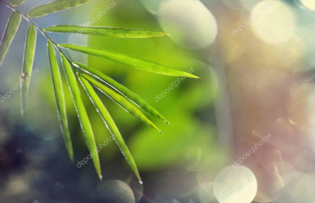Green leaves in garden
