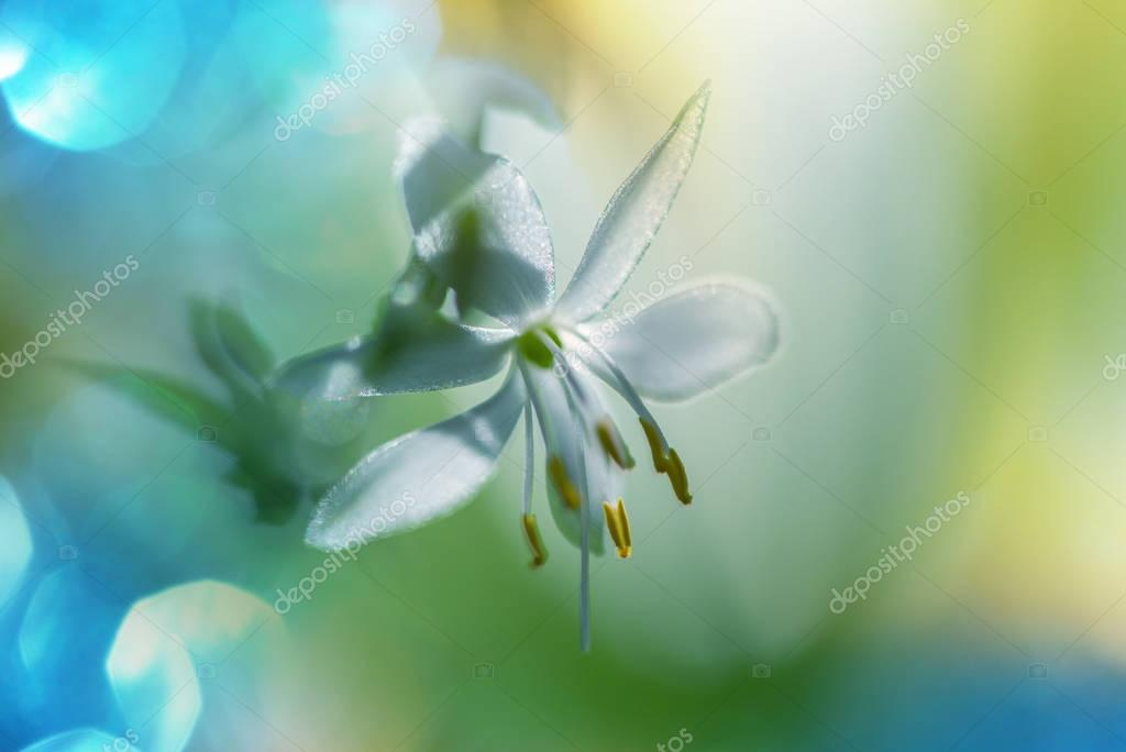 Spring flowers, close up shot