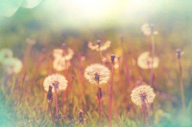 Spring sunny meadow