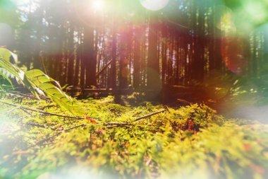 exotic fern in sunlight